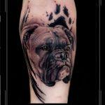portret boxer hond dier arm trash.jpg