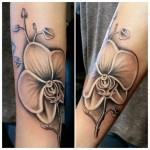 Boele-orchid.jpg