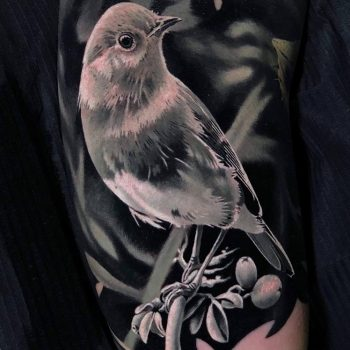 Bird in black & grey