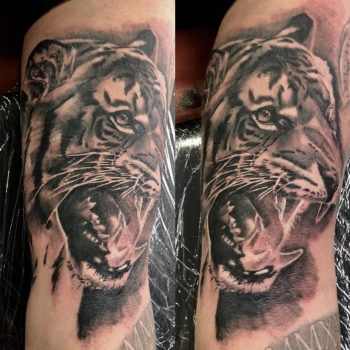 Black & grey tiger